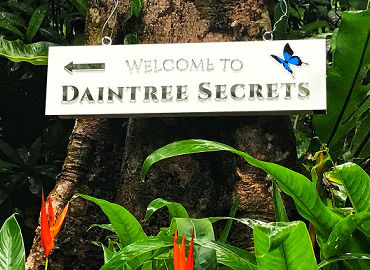 Welcome to Daintree Secrets