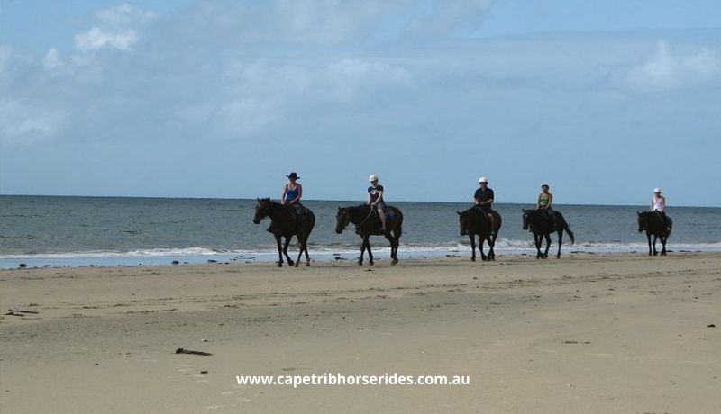 Daintree Tours & Activities - Cape Trib Horse Rides