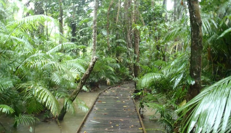 Daintree Tours & Activities - Rainforest Boardwalks