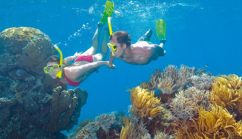 Daintree Tours & Activities - Snorkelling The Reef