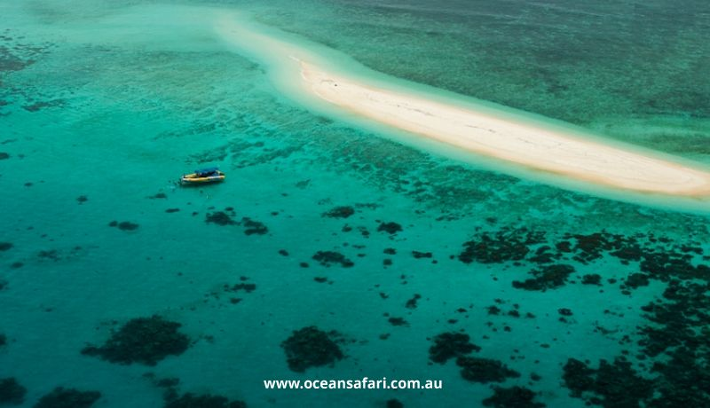 Daintree Tours & Activities - Great Barrier Reef