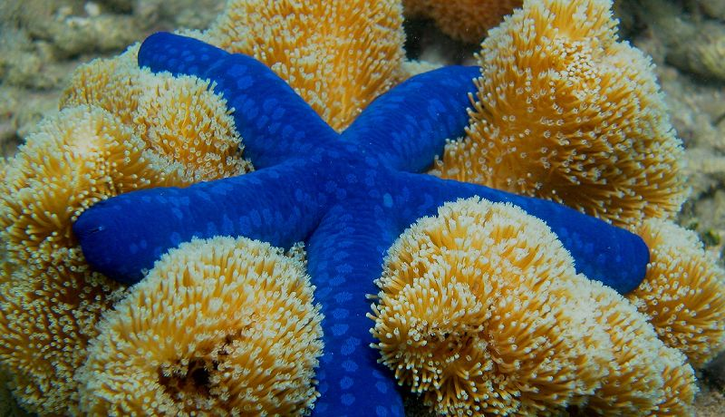 Great Barrier Reef Star Fish  - Daintree Secrets Rainforest Sanctuary