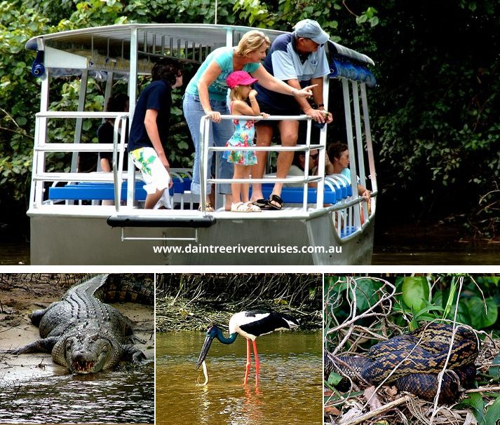 Daintree Tours & Activities
